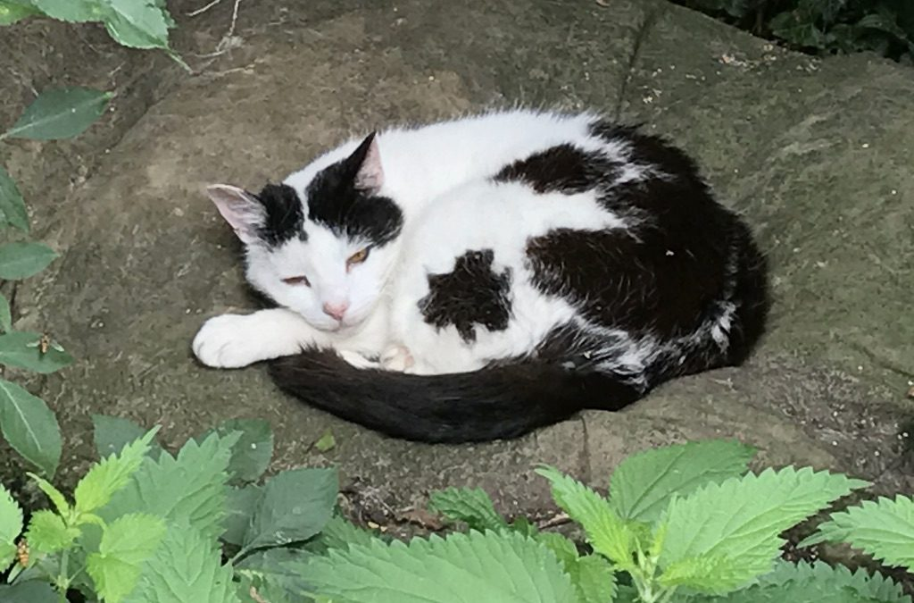 """""""So relaxed and at home""""    Fiona O.   UK"""