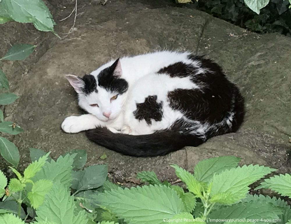 """""""So relaxed and at home""""  