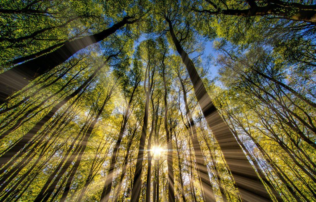 Beliefs | Energy Field Mastery | Tamara Schenk